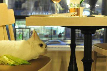Loving Hut – Vegan Restaurant